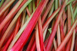 Siberian Rhubarb and MenopauseSymptoms